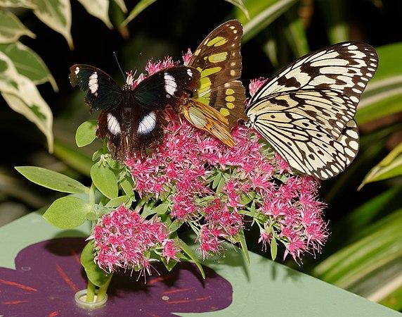 2015-10-24 13-13-38 papillon-hunawihr.jpg