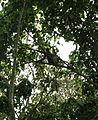 2016-04-03 Chitwan National Park, Nepal. 5884.jpg