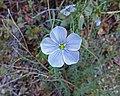 2016.04.22 11.36.43 DSC03559 - Flickr - andrey zharkikh.jpg