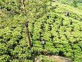 20160129 Sri Lanka 4165 Deniyaya sRGB (25142947483).jpg
