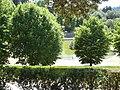 2017-06-20 Giardino di Boboli 96.jpg