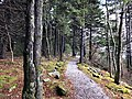 2019-10-27 12 04 26 View northeast along the Whispering Spruce Trail within a Red Spruce grove just southwest of Spruce Knob in Pendleton County, West Virginia.jpg