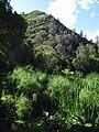 2019 Ubaque - Borde de la laguna de Ubaque, laderas del cerro el Quinto (Güinto).jpg