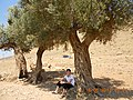 47800 Derik-Mardin, Turkey - panoramio (3).jpg
