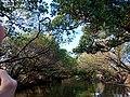 555594031Taijiang National Park2.jpg