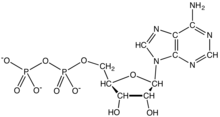 Skeletal formula of ADP
