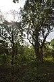 AJC Bose Indian Botanic Garden - Howrah 2018-04-01 2268.JPG