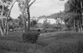 ASC Leiden - NSAG - van Es 2 - 002 - Nine round traditional white huts with straw pointed roofs on a lawn at Makere College - Kampala, Uganda - 29-11-1961 - 4-12-1961.tiff