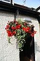 A hanging basket, Theydon Bois, Essex, England.JPG