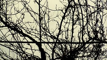 A picture of tree without leafs in rains.jpg