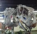 Abelissauro (Abelisaurus comahuensis) na UERJ 20161113.jpg