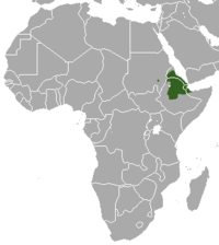 Abyssinian Genet area.png