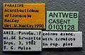 Acanthostichus arizonensis casent0103128 label 1.jpg