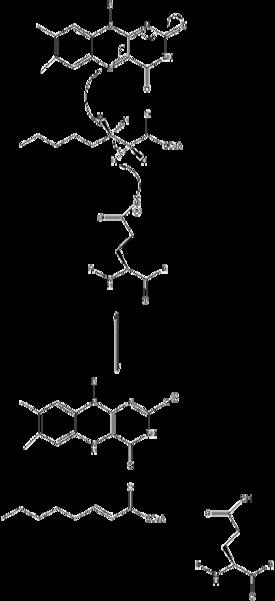 Acyl CoA dehydrogenase - Wikipedia