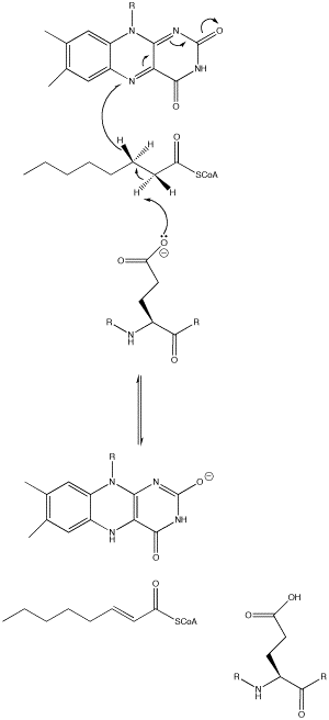 Acyl CoA dehydrogenase - Image 2: The overall mechanism of Acyl-CoA dehydrogenase.