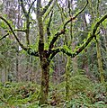 Aerial Garden-Ferns on a tree.jpg