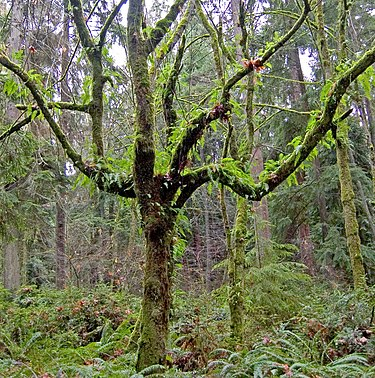 Epifity porastające drzewo