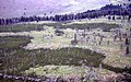 Aerial view of a 13 year old lodgepole pine forest (f5b2d479-4335-483d-9471-5f47a69e7515).jpg