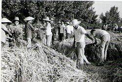 Ahfaz farmers1.jpg