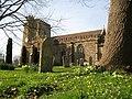 All Saints churchyard in the springtime - Merriott - geograph.org.uk - 1207652.jpg