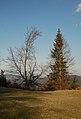 Almesbrunnberg, trees.jpg