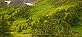 Alpine (4864657141).jpg