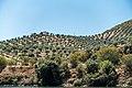 Alto Douro Vinhateiro DSC00211 (37170563971).jpg