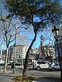 Alzina del passeig de Gràcia P1420900.JPG