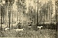 American game-bird shooting (1910) (14753110614).jpg