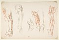 Anatomical Studies of Legs MET DP815492.jpg