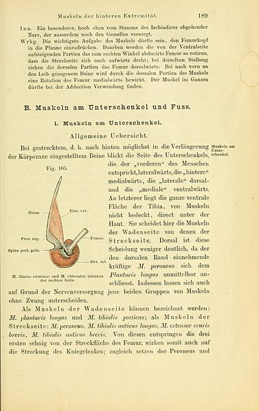 File:Anatomie des Frosches (Page 189, Fig. 105) BHL4404788.jpg ...