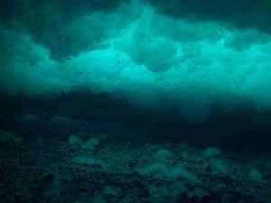 Anchor ice - Anchor ice growing on the sea floor in McMurdo Sound, Antarctica