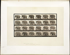 Animal locomotion. Plate 733 (Boston Public Library).jpg