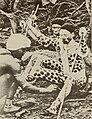 Annale van die Suid-Afrikaanse Museum (1988) (18228748258) (crop).jpg