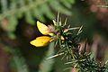 Araignées, insectes et fleurs de la forêt de Moulière (Les Chirons Noirs) (29011119226).jpg