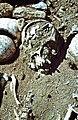 Archäologische Grabung 1979 - panoramio (1).jpg