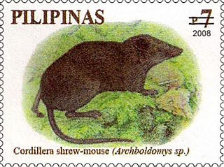 <i>Soricomys kalinga</i> rodent