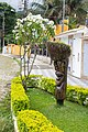 Around Paraty, Brazil 2018 299.jpg