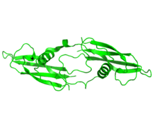 Artemin Tertiary Structure.png