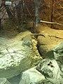 Artis, Zoo, Dierentuin - panoramio (46).jpg
