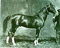 Artsakh horse.jpg