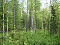 Asinovsky District, Tomsk Oblast, Russia - panoramio (125).jpg