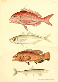 paraziták morskych ryb