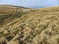 Auchterarder path near Greenlaw - geograph.org.uk - 673792.jpg