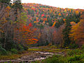 Autumn-trees-creek - West Virginia - ForestWander.jpg