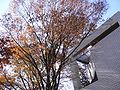 Autumn leaves at Hillside Terrace.jpg