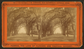 Avenue in Bonaventure, near Savannah, Georgia, from Robert N. Dennis collection of stereoscopic views 7.png