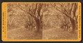 Avenue of Oaks, near Beaufort, S.C, by Barnard, George N., 1819-1902.png
