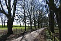 Avenue of trees - geograph.org.uk - 151725.jpg