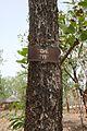 Bénin-Trichilia emetica (1).jpg